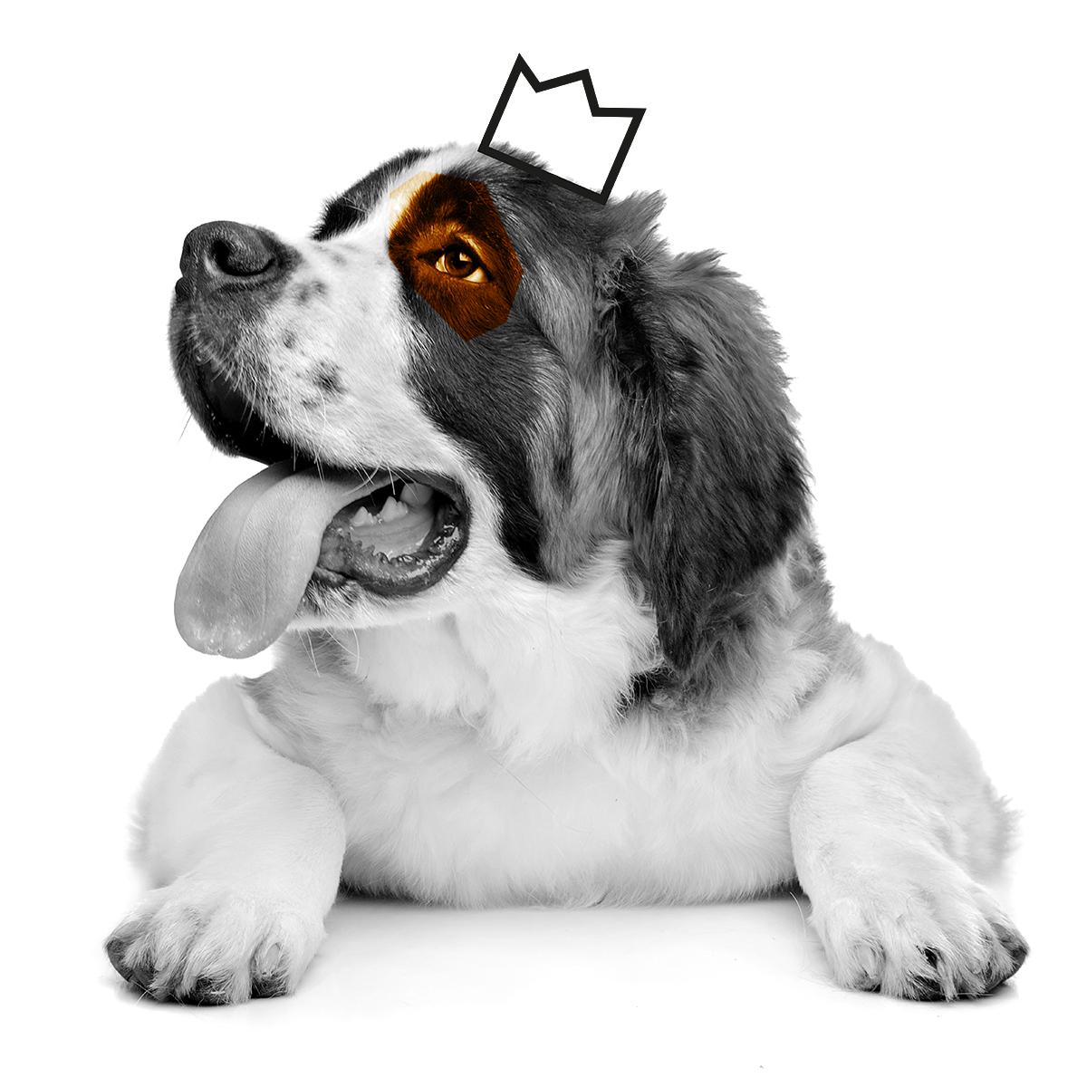 boten-hund