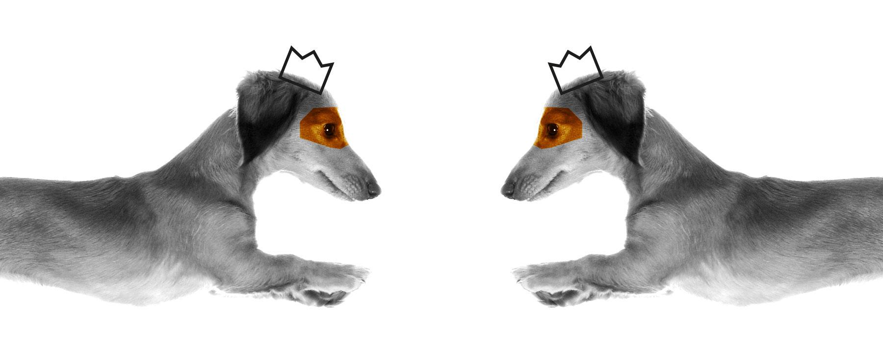 koenig-koffein-jump-hund