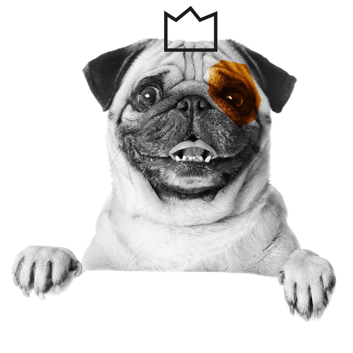 mopsi-dog-links
