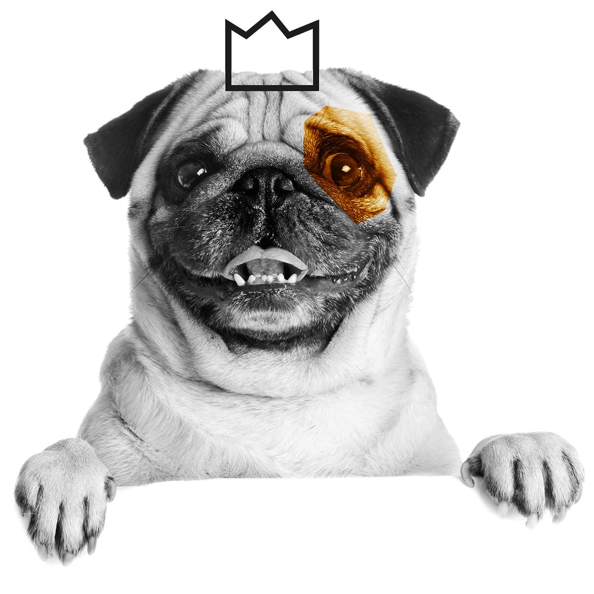 mopsi-dog